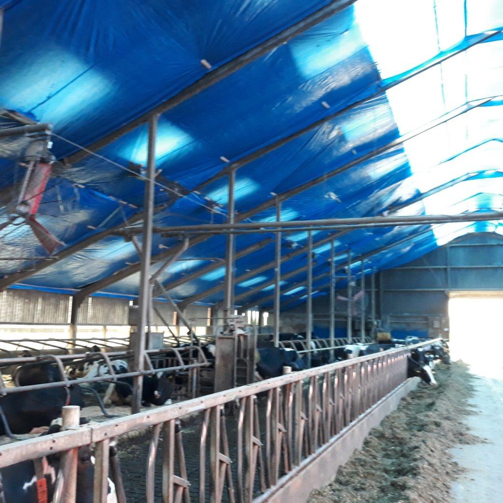 asbest verwijderen ligboxenstal